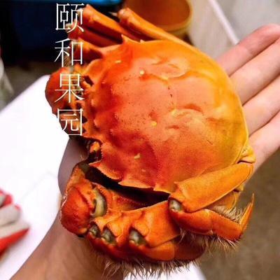 江苏省苏州市相城区阳澄湖大闸蟹 4.0两以上 统货