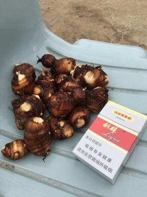 安徽省阜阳市临泉县红芽芋头 2cm以上