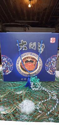 江苏省徐州市新沂市洪泽湖螃蟹 2.5-3.0两 母蟹