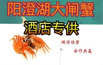 江苏省苏州市昆山市阳澄湖大闸蟹 4.0两以上 公蟹