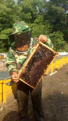 黑龙江省哈尔滨市尚志市椴树蜜 桶装 98% 2年