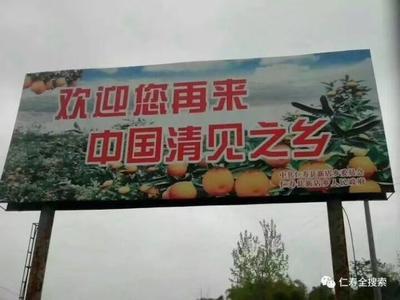 四川省眉山市仁寿县青见柑桔 6 - 6.5cm 3两以上