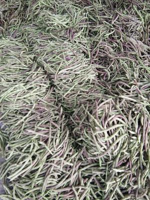 辽宁省锦州市凌海市紫扁豆 1cm以上 15cm以上