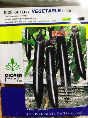 四川省成都市成华区茄子种子