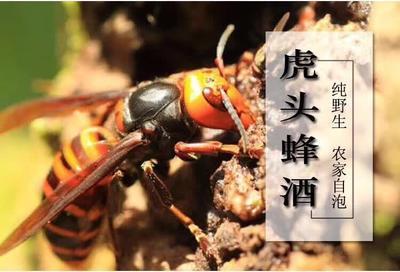 贵州省遵义市凤冈县马蜂