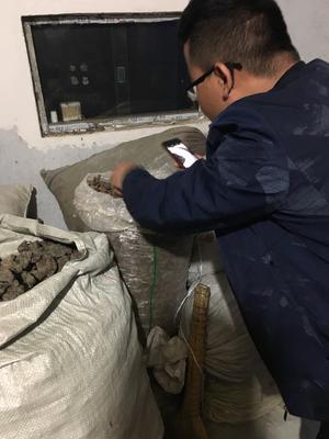 陕西省汉中市留坝县猪苓