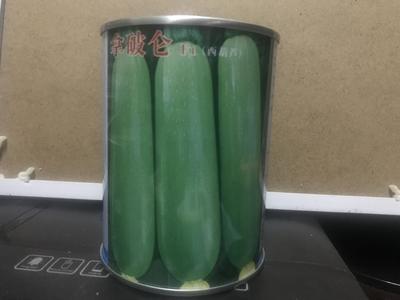 云南省临沧市云县西葫芦种子