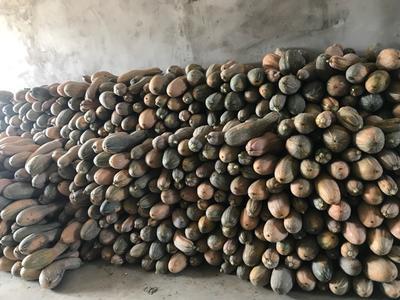 湖北省襄阳市襄州区板栗南瓜 2~4斤 长条形