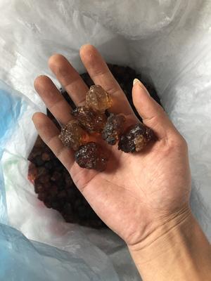 浙江省金华市金东区野生桃胶 18-24个月