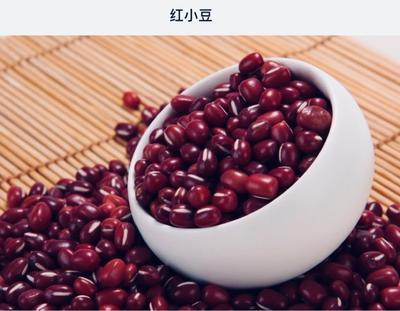 黑龙江省绥化市明水县赤小豆