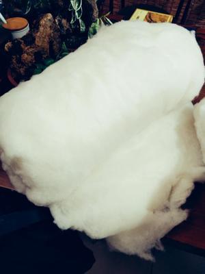 新疆维吾尔自治区石河子市石河子市新疆棉花