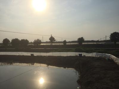 江苏省盐城市盐都区兴化螃蟹 2.0-2.5两 公蟹