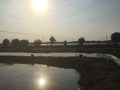江苏省盐城市盐都区兴化螃蟹 2.0两以下 母蟹
