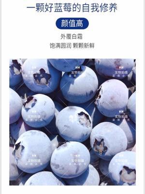 山东省青岛市黄岛区薄雾蓝莓 鲜果 15mm以上