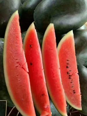 广西壮族自治区南宁市横县黑美人西瓜 有籽 1茬 8成熟 6斤打底