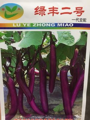 四川省成都市新都区茄子种子