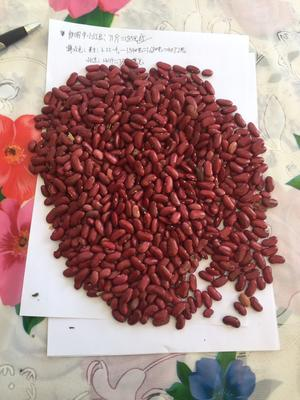 内蒙古自治区呼和浩特市玉泉区红芸豆