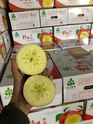 云南省昭通市昭阳区丑苹果 纸袋 片红 70mm以上