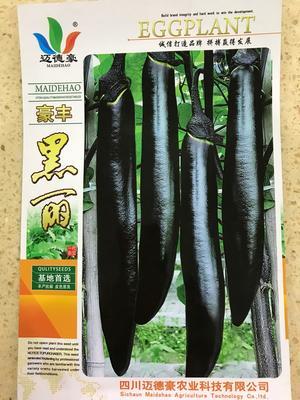山东省临沂市兰山区茄子种子