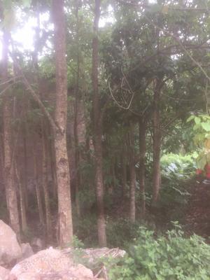 广西壮族自治区玉林市北流市秋枫树