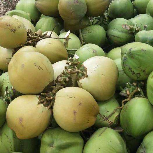 椰青 海南椰子 新鲜椰青 现摘现发 物流发货