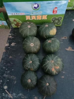 内蒙古自治区包头市青山区贝贝南瓜 0.4~0.6斤 扁圆形
