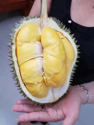 福建省漳州市平和县泰国榴莲 60 - 70%以上 3 - 4公斤