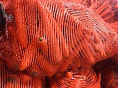 山东省潍坊市青州市三红胡萝卜 10cm以下 2两以下 3cm以下