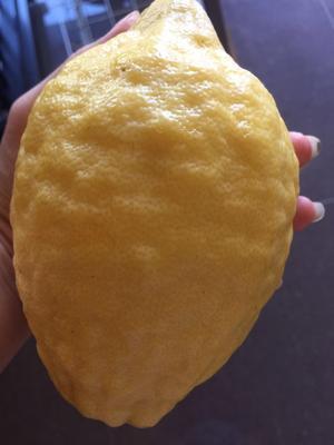 广西壮族自治区来宾市象州县香水柠檬 2 - 2.6两