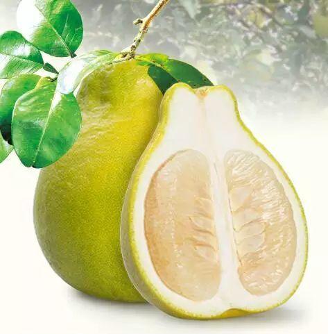 沙田柚 1.5斤以上