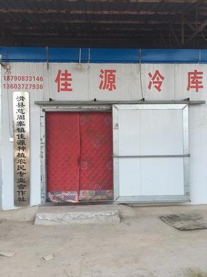 河南省安阳市滑县大叶韭菜 二茬 35~40cm