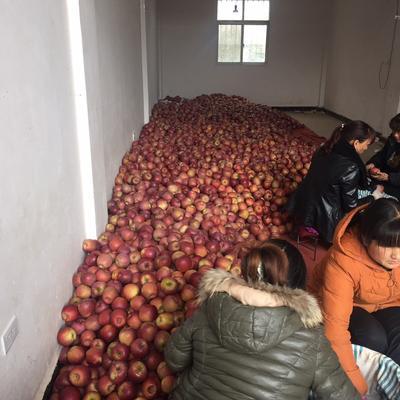 云南省昭通市昭阳区丑苹果 光果 片红 80mm以上