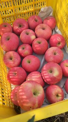 这是一张关于红富士苹果 光果 片红 80mm以上的产品图片