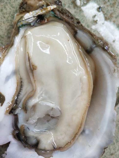 湛江牡蛎 2-3两/只 人工殖养