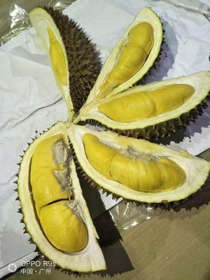 广东省广州市白云区猫山王榴莲 90%以上 2.0公斤