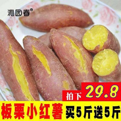 山东省临沂市河东区番薯 红皮 3两~6两