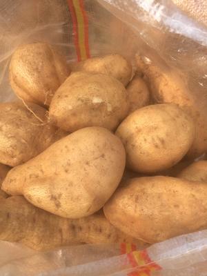 山东省济宁市邹城市红心红薯 黄皮 6两~1斤