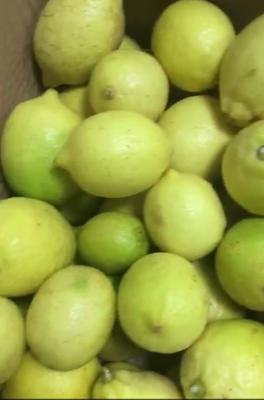 广东省韶关市浈江区黄柠檬 1.6 - 2两