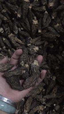 云南省昆明市五华区干羊肚菌 袋装 1年