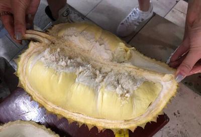 云南省昆明市禄劝彝族苗族自治县金枕头榴莲 80 - 90%以上 3 - 4公斤