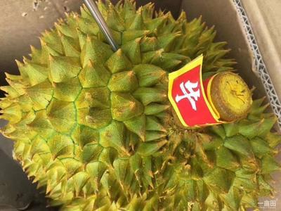 广西壮族自治区崇左市凭祥市金枕头榴莲 80 - 90%以上 3 - 4公斤