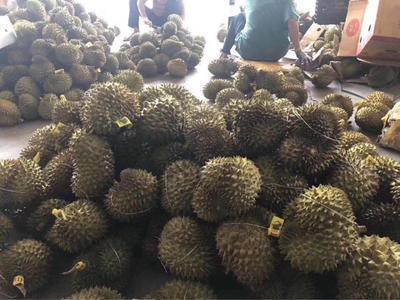 广西壮族自治区河池市金城江区巴掌榴莲 40 - 50%以上 2 - 3公斤