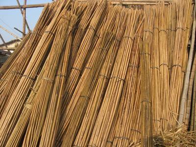 这是一张关于茶杆竹的产品图片