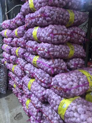 重庆江北区金乡大蒜 6.0-6.5cm 多瓣蒜
