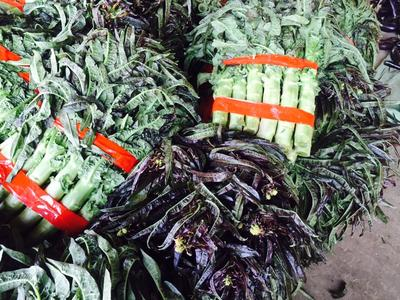 这是一张关于红叶香莴苣 50-60cm 1.5~2.0斤的产品图片
