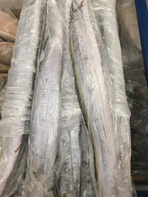 四川省成都市青白江区西非带鱼 野生 0.5公斤以下