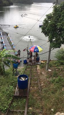 广东省惠州市龙门县水库草鱼 人工养殖 1-2.5公斤