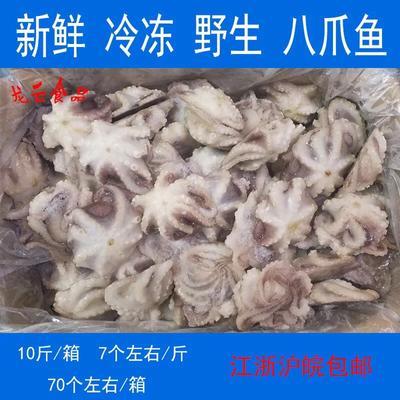 这是一张关于八爪鱼的产品图片