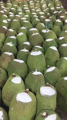 湖南省长沙市雨花区越南菠萝蜜 15斤以上
