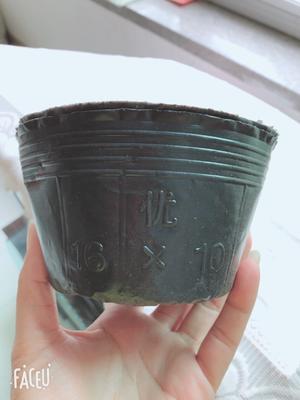 河北省唐山市玉田县营养杯